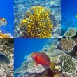 Stock Photo: Indiocean. Fishes in corals