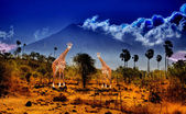 Two giraffe in savannah on background of mountains — Stock Photo
