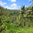 Stock Photo: Kind on rice terraces, Bali, Indonesia