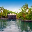 Maldives. Pool with small fall in tropical garden. — Stock Photo