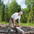 The man in wood saws a tree a chain saw - Stockfoto