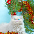 Foto Stock: Symbol of year 2011 white cat