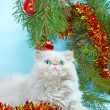 Stockfoto: Symbol of year 2011 white cat