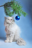 A branch with New Year's balls and a symbol of year 2011 white cat — Stock Photo