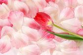Kwiat i płatki — Zdjęcie stockowe