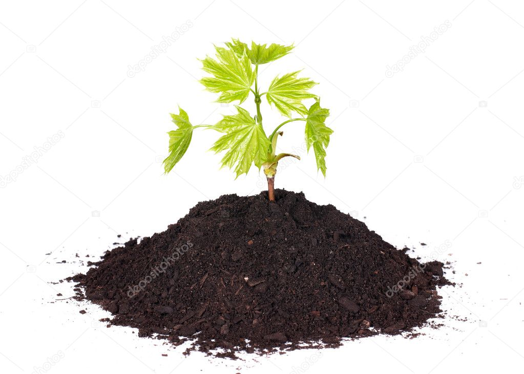 Small plant from soil.  Stock Photo #3558888