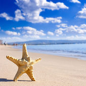 Starfish on the beach — Stock Photo