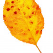 Stock Photo: Yellow leaf