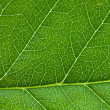 Photo: Leaf background