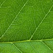 Leaf background — Stock Photo #3121666