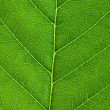 Leaf background — Foto de stock #3121667