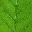 Leaf background — Stockfoto #3121667