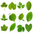 Green leaves — Stock Photo #3267728