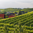 Vineyards in the Black Forest, Germany — Stock Photo #3853966