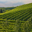 Stock Photo: Vineyards in the Black Forest, Germany