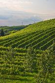 Vinice v černém lese, německo — Stock fotografie