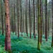 Deep forest in the Black Forest, Germany — Stock Photo