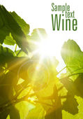 Green wine leaves — Stock Photo