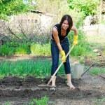 Gardening — Stock Photo #3231160