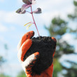 Plant in a hand — Stock Photo #3239997