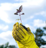 Plant in a hand — Stock Photo
