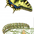 Stock Photo: Close up of swallowtail