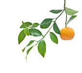 Tangerine isolated on white background — Stock Photo