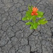 Stok fotoğraf: Flower growing from barren land