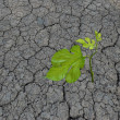 Seedling growing from barren land — Stock Photo #3445552