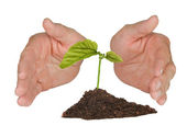 Tree protected by hands — Stock Photo