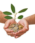 Palms with a tree growing from pile of coins — Stock Photo