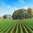 Royalty-Free Stock Photo: Field at Israel