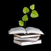 Tree seedling growing from an open book — Stock Photo