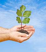 Tree seedling in hands as a symbol of nature protection — Stock Photo