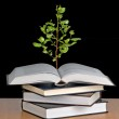 Tree growing from open book — Stock Photo #3469825