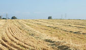 Reaped wheat field — Stock Photo