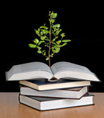 Tree growing from open book — Stock Photo