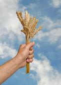 Bonde med vete som en gåva av jordbruk — Stockfoto