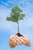 Tree in hands as a symbol of nature protection — Stock Photo