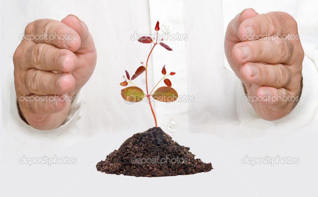 Tree protected by hands as a symbol of nature potection — Stock Photo #3492084