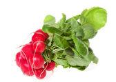 Bunch of red radish — Stock Photo