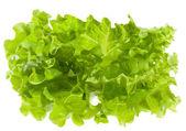 Green salad — Zdjęcie stockowe