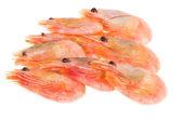 Shrimps — Stockfoto