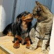Cat and dog love - Stock Photo