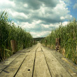 Wooden bridge - Stock Photo