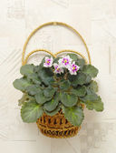 Viola in wicker on wall — Stock Photo