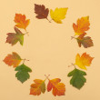 Autumn leaf round rim — Stock Photo