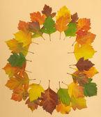 Autumn leaf oval rim — Stock Photo