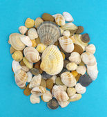 Sea shells and stones — Stock Photo