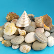 Sea clamshells and stones — Stock Photo